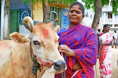 Een zogenoemd revolvingfonds stelt gezinnen in staat een koe te kopen op afbetaling. © Ananda vzw